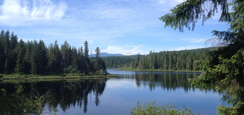Sayward Forest