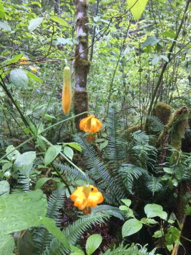 Sayward Forest 2018 003