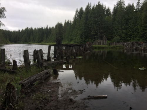 Sayward Forest 2018 006