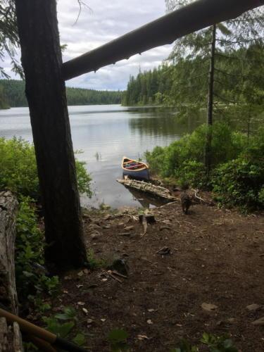 Sayward Forest 2018 021