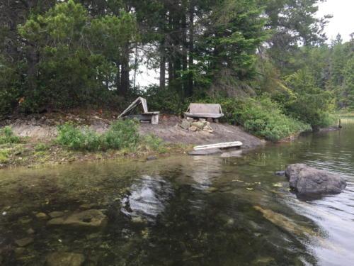 Sayward Forest 2018 026