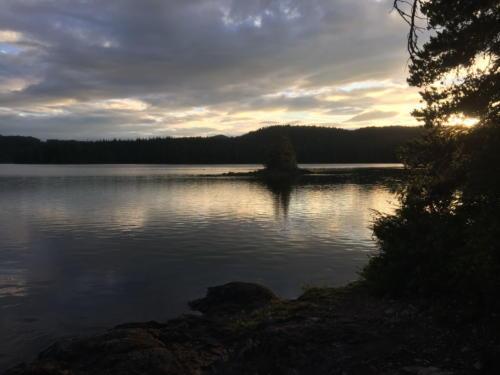 Sayward Forest 2018 027